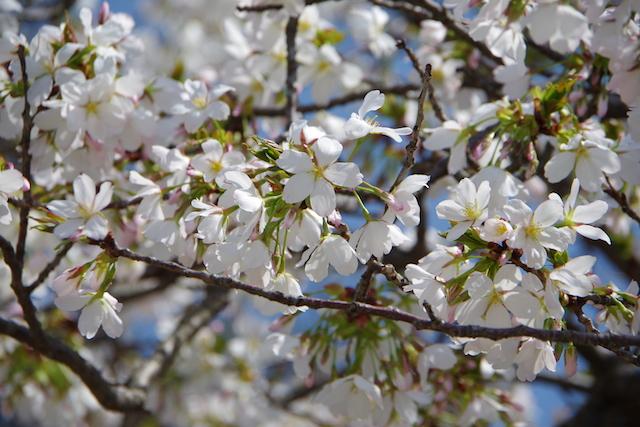 春の宮島世界遺産厳島神社・宮島水族館(みやじマリン)11