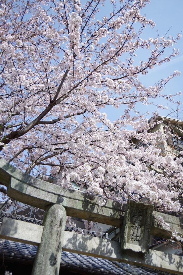 春の宮島世界遺産厳島神社・宮島水族館(みやじマリン)21