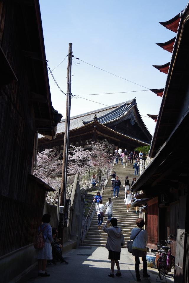 春の宮島世界遺産厳島神社・宮島水族館(みやじマリン)23