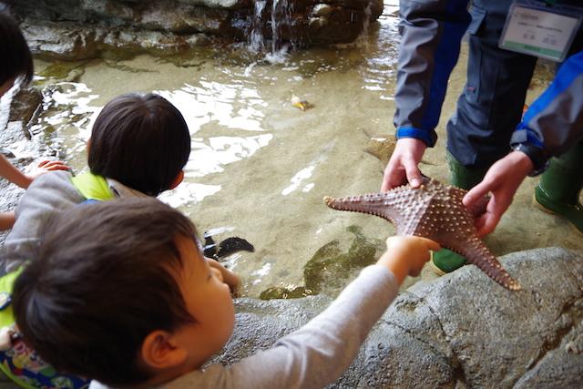 春の宮島世界遺産厳島神社・宮島水族館(みやじマリン)5