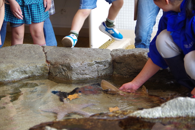 春の宮島世界遺産厳島神社・宮島水族館(みやじマリン)6