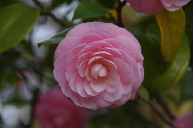 春の宮島世界遺産厳島神社・宮島水族館(みやじマリン)27