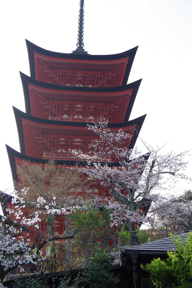 春の宮島世界遺産厳島神社・宮島水族館(みやじマリン)28