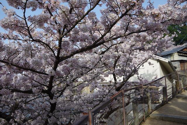 春の宮島世界遺産厳島神社・宮島水族館(みやじマリン)29