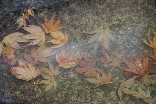 春の宮島世界遺産厳島神社・宮島水族館(みやじマリン)30